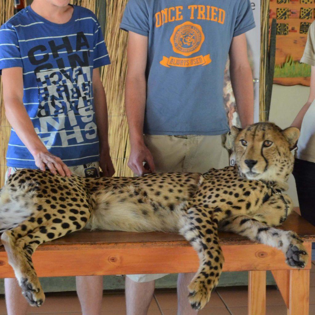 Op de foto met een cheeta