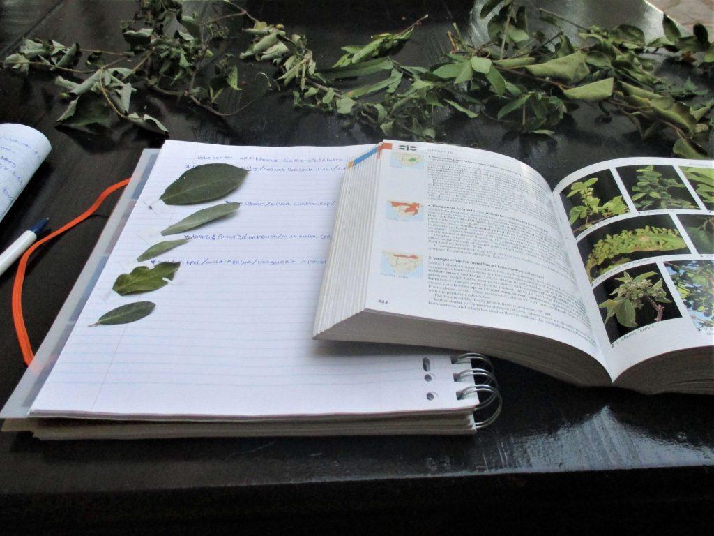 Boek met bomen